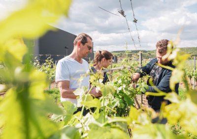 Wolfgang, Birgit und Christian im Weingarten
